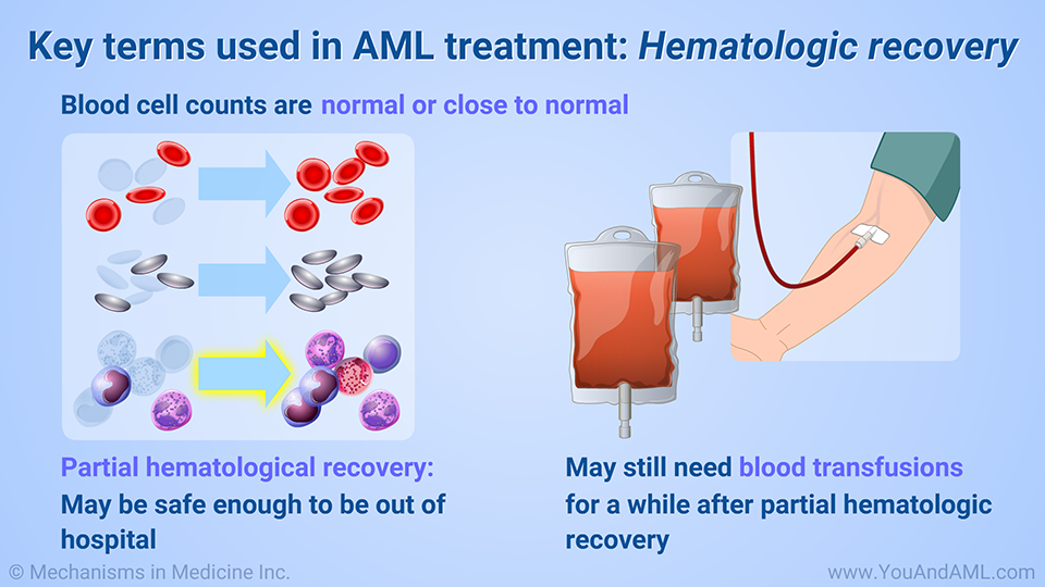 Key terms used in AML treatment: Hematologic recovery