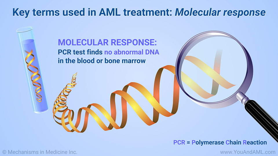 Key terms used in AML treatment: Molecular response
