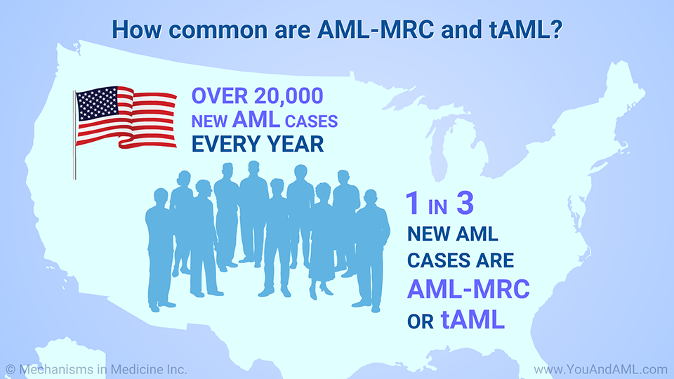 How common are AML-MRC and tAML?