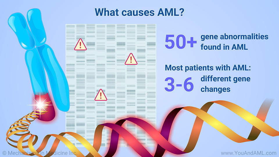 What causes AML? (Continued)